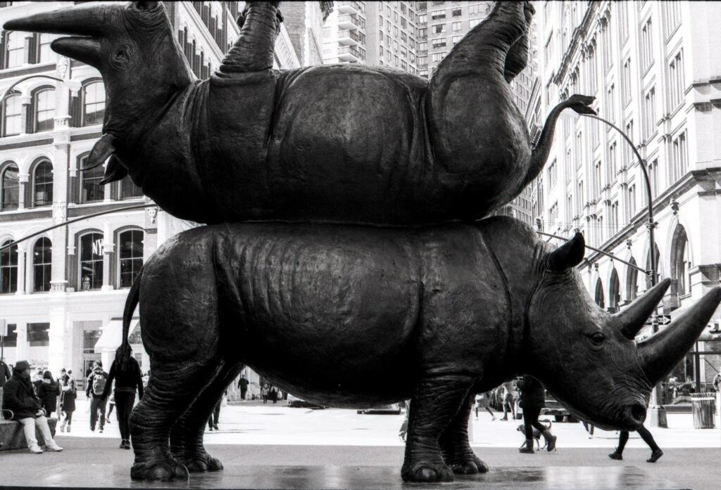 Rhino Statute